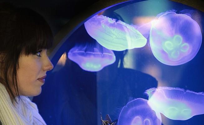 Какво значение има безсмъртната медуза за науката и човечеството
