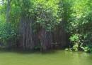 Маду Ганга - кой ще спаси живота в крайбрежните зони