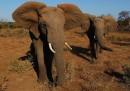 9 слона са открити мъртви в Южна Африка