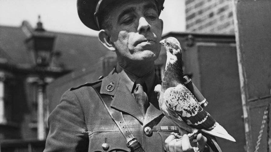 Кучета камикадзе, прилепи бомби и още животни оръжия