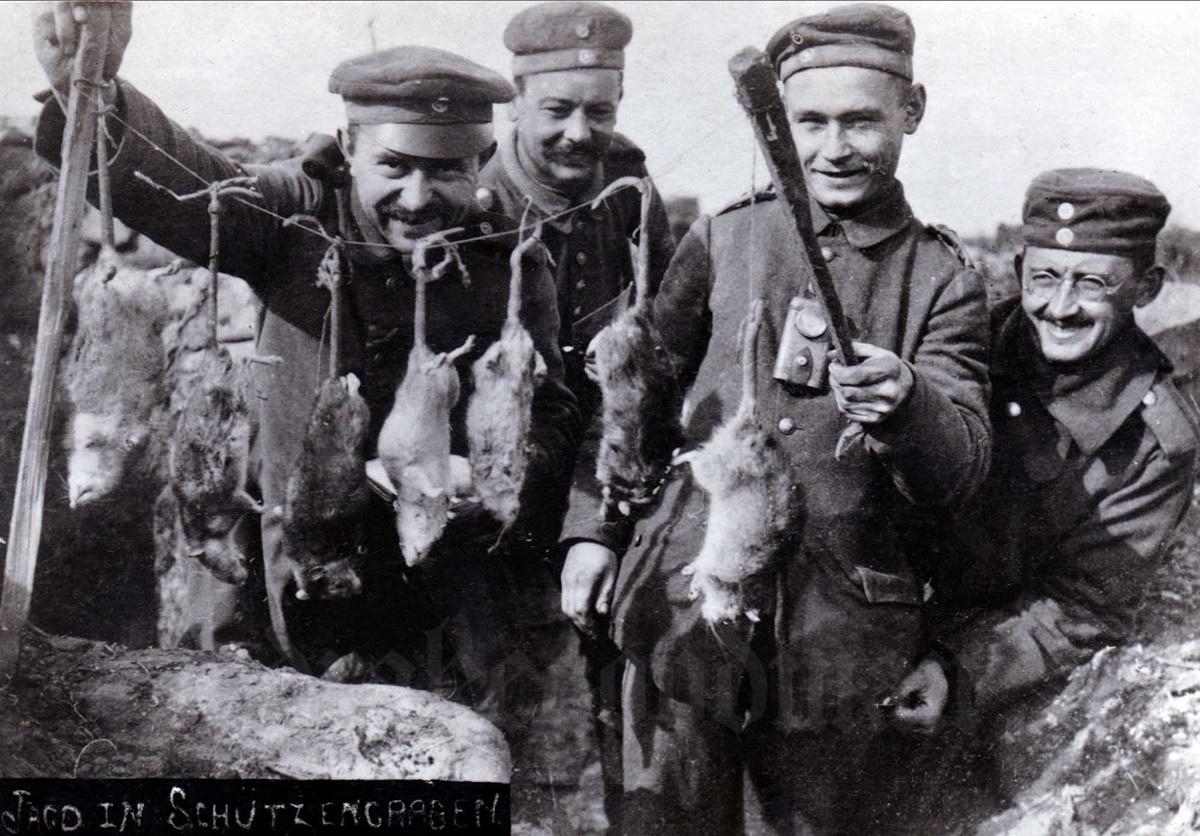 Войниците по време на Първата световна война трябва да се справят с милиони плъхове.