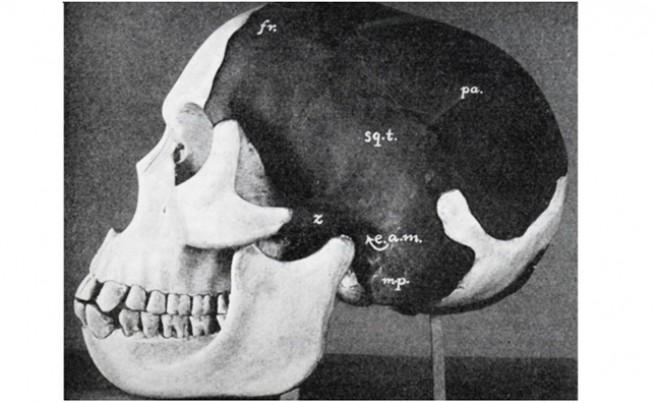 Възстановка на черепа на Пилтдаунския човек