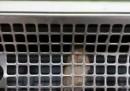 Заснеха мишка в хладилна витрина в магазин
