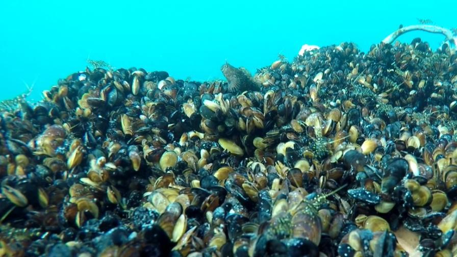 Варненска компания връща хармонията в моретата