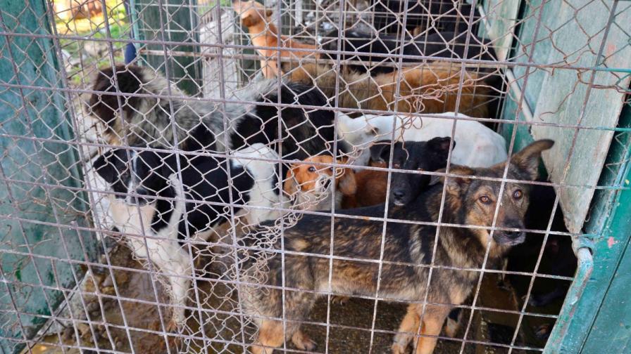 5000 безследно изчезнали кучета в София