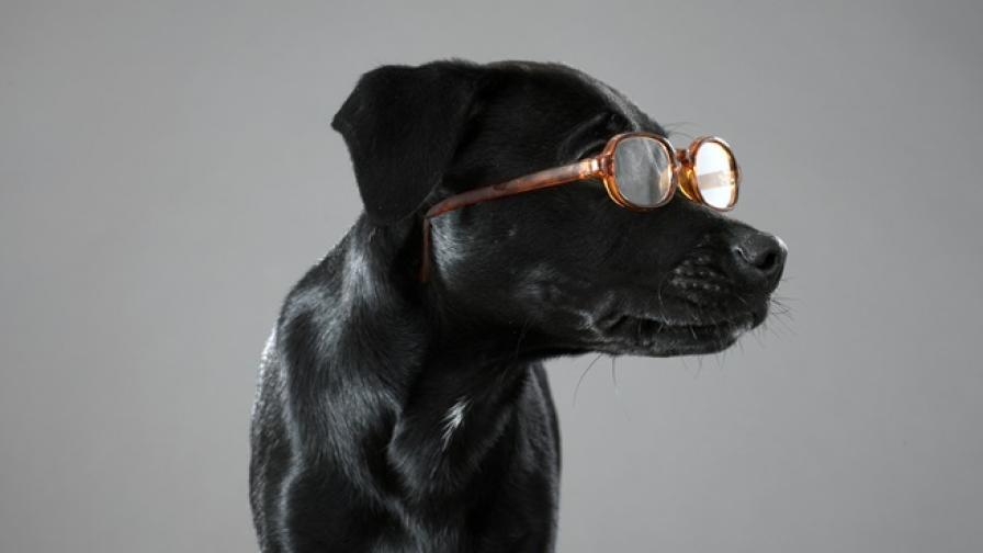 Кучетата могат да ни измамят, за да получат това, което искат