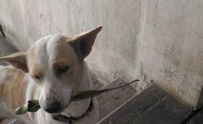 Туа Плу - най-любезното куче, което сте виждали (видео)
