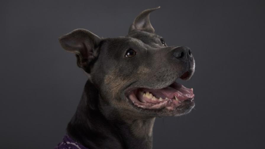 Куче уби собственика си пред екип на Би Би Си
