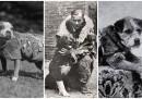 Най-преданите кучета в историята