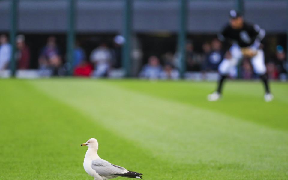 по време на двубоя между Бостън и Чикаго в бейзболната лига на САЩ