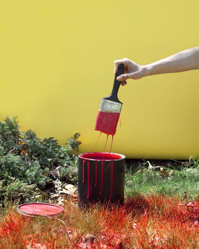 В Кентъки е забранено да боядисваш моравата си в червено
