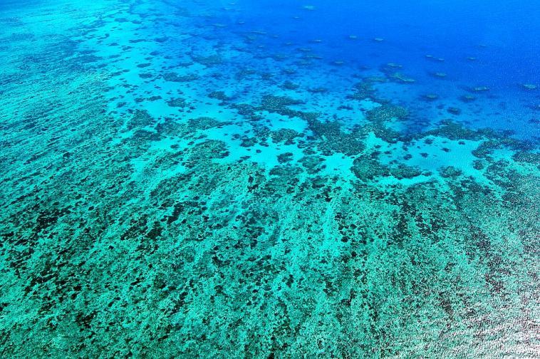 РАК<br /> <br /> Въпреки че раците са известни със своя афинитет към домашния комфорт, в момента, в който те се почувстват на сигурно място, ще излязат от черупката си и ще се отдадат на забавление. На тях астролозите предлагат да се потопят в сините води на Големия бариерен риф, Австралия. От разходка с лодка, до гмуркане и обиколки с хеликоптер - има разнообразие от варианти, с които да изследвате тази невероятна екосистема.