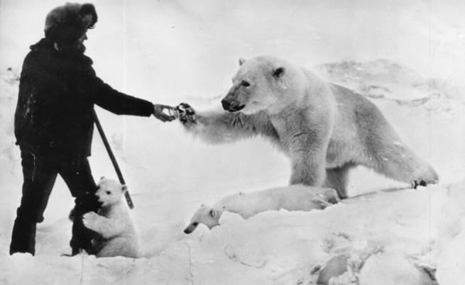 Войник подава консерва с кондензирано мляко на майката мечка, докато бебето мече е гушнало крака му.