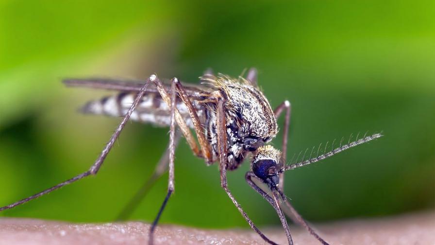 Лекар очаква още заразени със западнонилска треска