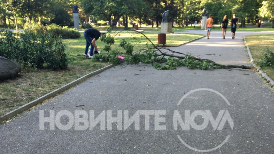 Клон се стовари върху жена с дете в Борисовата градина