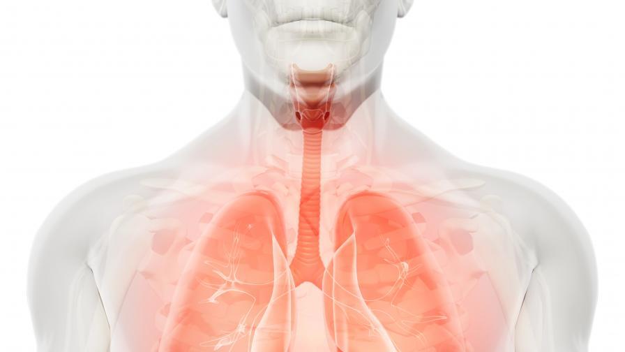 Безплатни прегледи на белите дробове