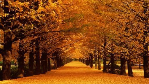 <p>9 факта за есента, които не знаехте</p>