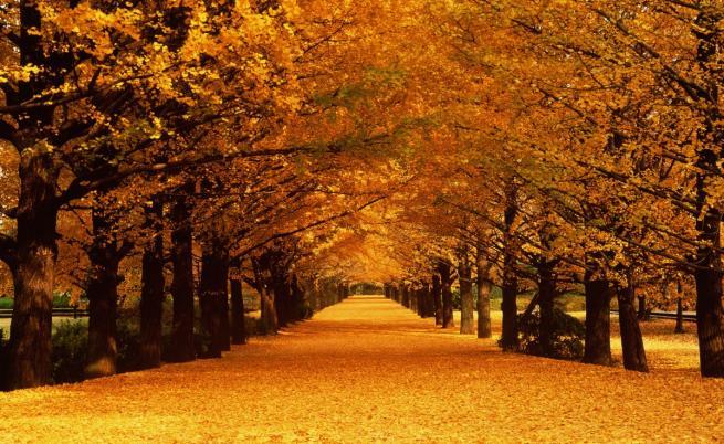 9 факта за есента, които не знаехте