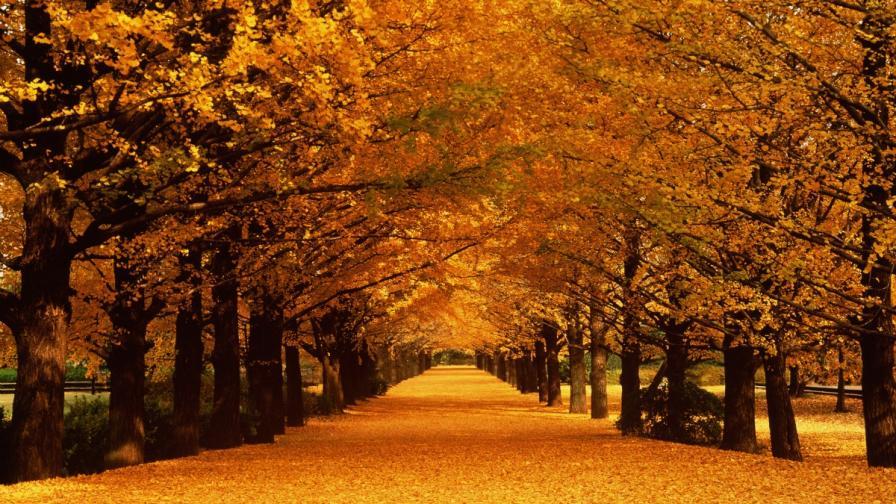 <p>Как ви влияе есента според зодията</p>
