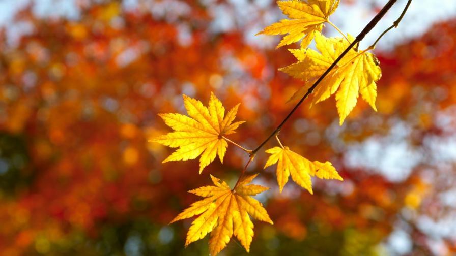 Синоптиците прогнозират топъл октомври