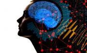 Откриха непознат досега орган в главата на човек