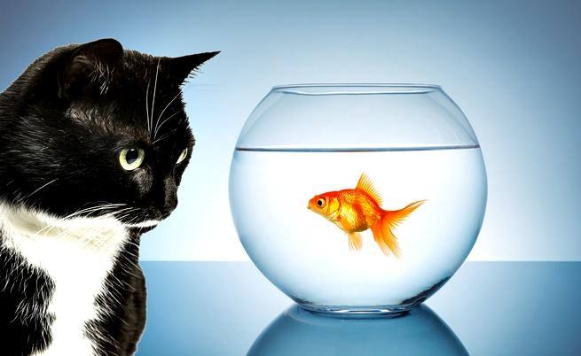 Имат ли чувства рибите?
