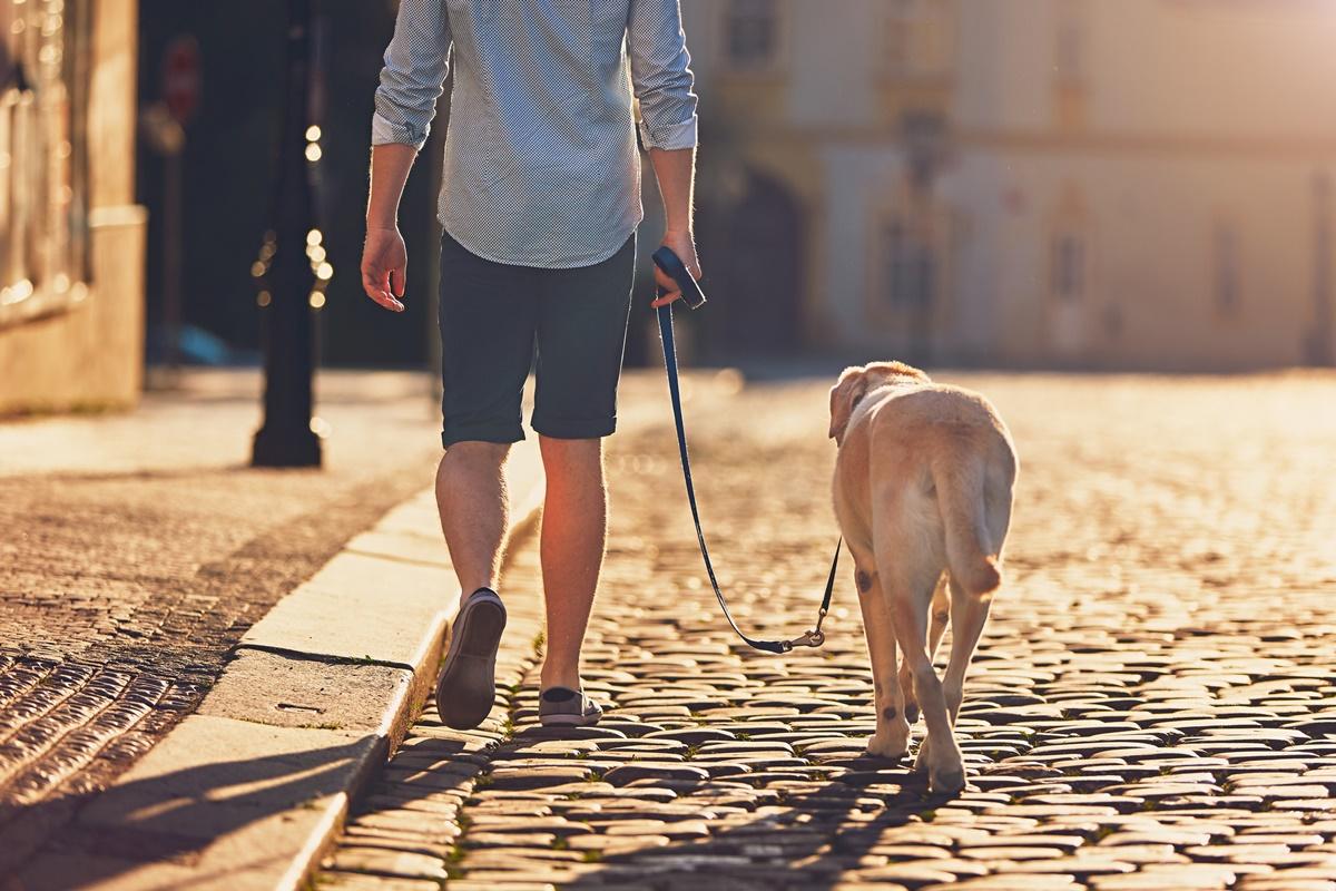 Бавна разходка (около 3 км/ч): 204 ккал/ч   255 ккал/ч<br /> Бърза разходка ( около 5 км/ч): 314 ккал/ч   391 ккал/ч