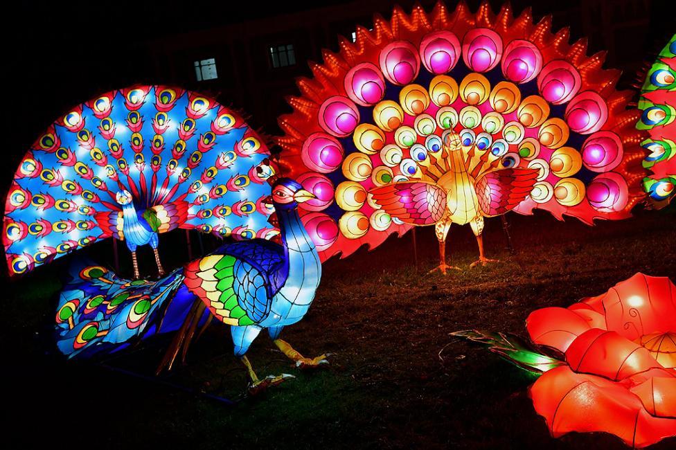 - Светещи фигури в тъмнината на зоологическата градина в Кьолн, Германия. Фестивалът ще продължи до 6 януари 2018 г. и включва 46 светлинни инсталации...