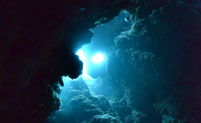 Колко неизвестни на хората същества обитават океаните