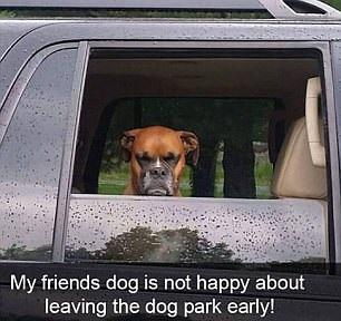 Кучето на мои приятели определено не е щастливо, че си тръгва рано от кучешкия парк.