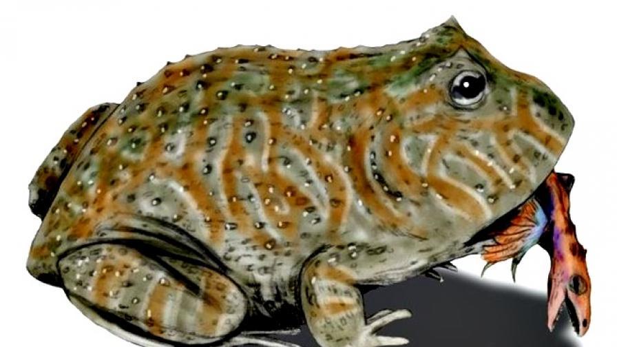 Древната дяволска жаба, която се хранела с динозаври