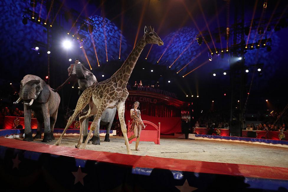 - Церемония по откриването на 42-ия Международен цирков фестивал на Монте Карло в Монако. Фестивалът ще се проведе от 18 до 28 януари.
