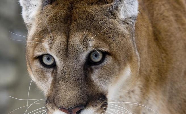 Земята изгуби още един животински вид