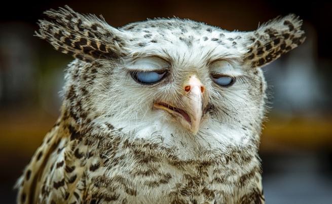 Изглеждали ли сте така в понеделник сутрин?