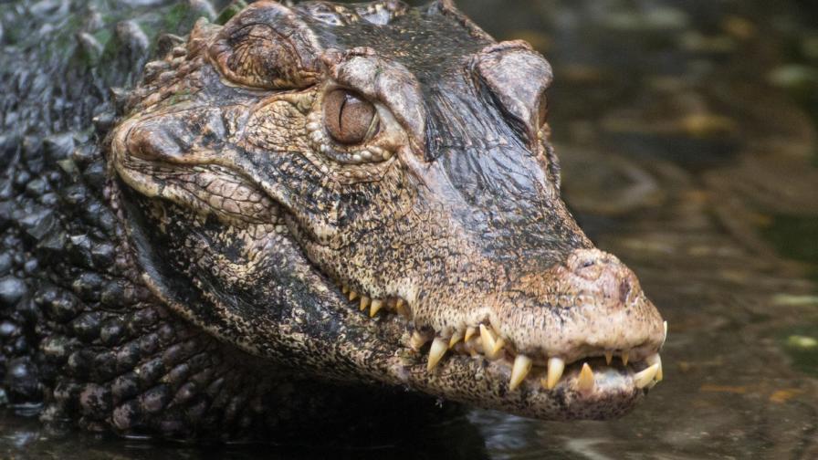 Нов животински вид - с оранжеви люспи и червени очи