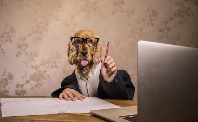 Куче с човешко лице развълнува потребителите.