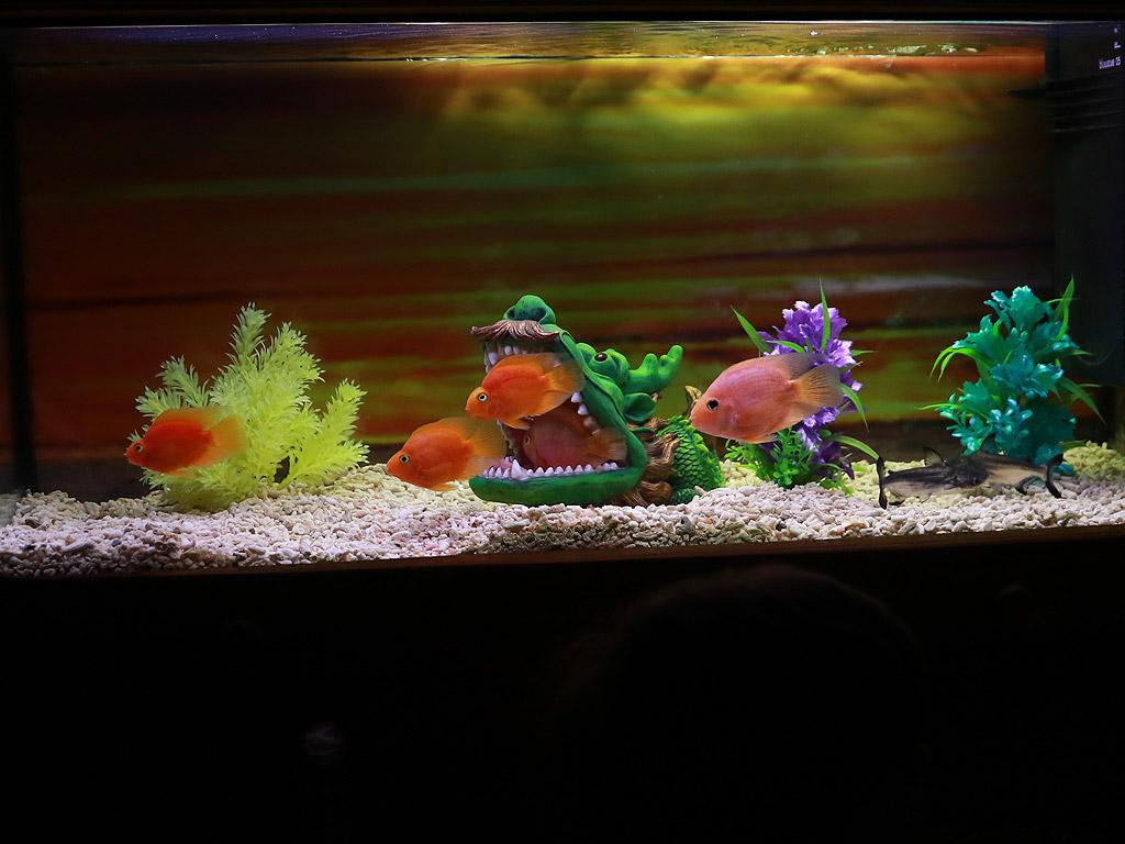 """От 1 март до 29 април Музейко представя своята най-пъстра временна изложба - """"Подводен свят"""". Изложбата пренася децата 20 000 левги под водата, за да ги срещне вероятно за първи път в живота им с едни от най-екзотичните риби на световния океан и сладководните басейни."""