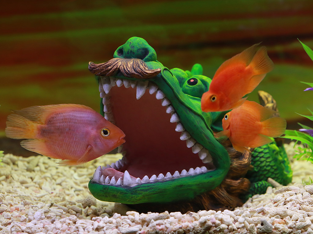 Риба Папагал