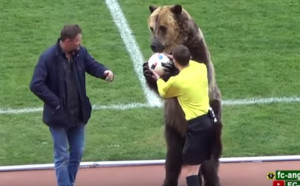 Не съдия, а мечка даде началото на мач в Русия