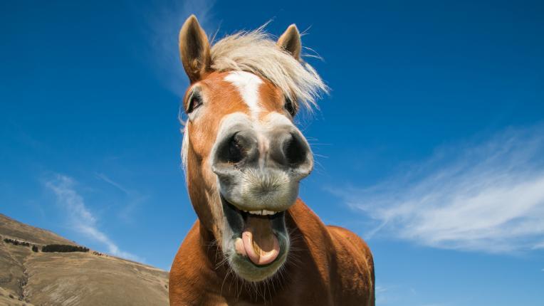 Ти ще използваш ли крем за коне?