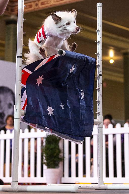 Шоу на любителите на кучета в парка и сградата на кралското изложение в Мелбърн, Австралия