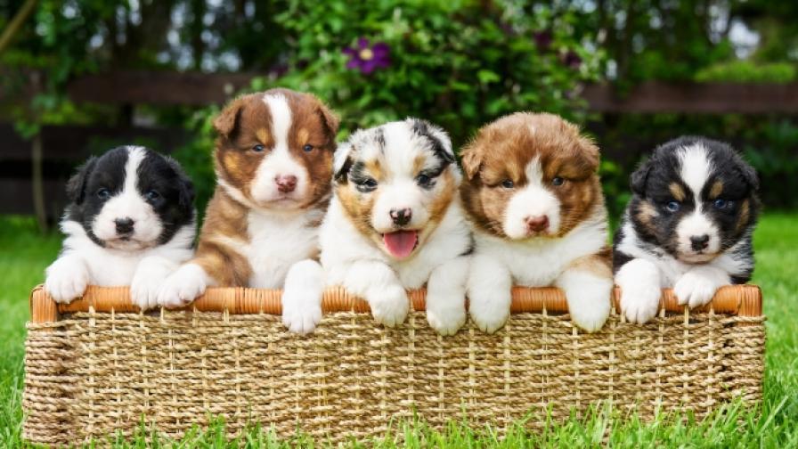 Кои са най-предпочитаните породи кучета (СНИМКИ)