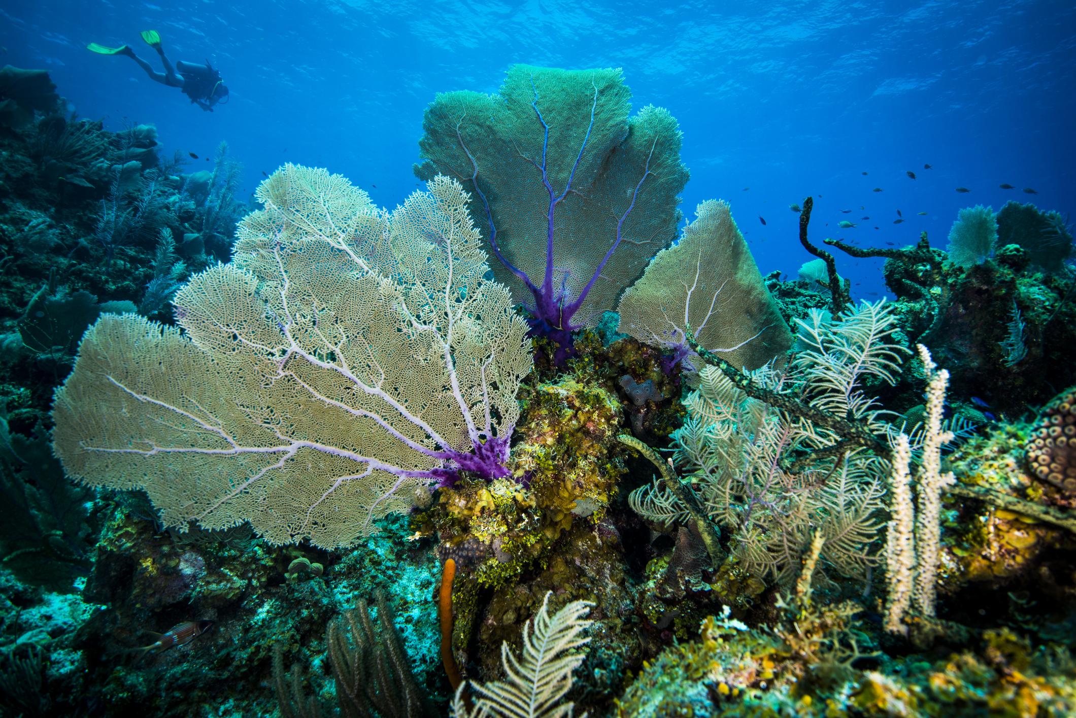 Малките Каймани, Западни Британски Инди<br /> Повечето Карибски острови, известни като дайвинг дестинации, днес не са това, което са били преди години, поради замърсяването, причинено от прекаленото застрояване с хотели и прекомерния риболов. Малкият Кайманов остров обаче е успял да съхрани богата екосистема и подводно богатство. Островът е с население само 200 жители и в северната му част има впечатляваща коралова стена с кристално чиста вода. Гмуркането в тази част е подходящо за начинаещи - водата е топла и плитка. Представителите на морската фауна са пъстроцветни риби и причудливи корали.
