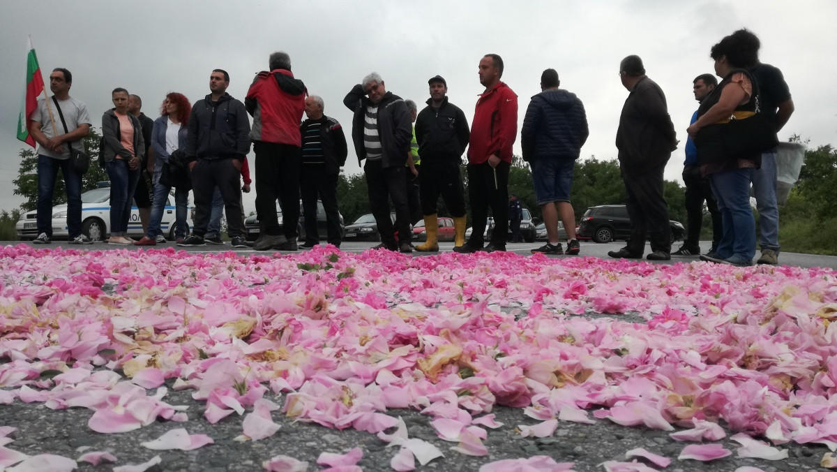 Розопроизводители от Казанлък протестираха днес срещу ниските изкупни цени на розовия цвят.Според тях вече ситуацията е извън контрол,заради обидната цена.Килограм цвят се изкупува за малко над 1 лев.При засилено полицейско присъствие производителите затвориха за малко пътя Стара Загора -Казанлък