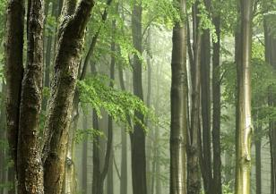 Амазонската джунгла и Ел Ниньо