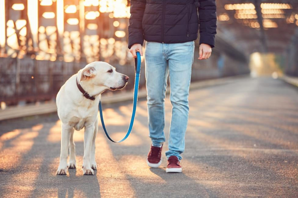 - Не подценявайте ролята на домашните любимци. Научно доказано е, че хората, които имат кучета по-лесно контролират теглото си.