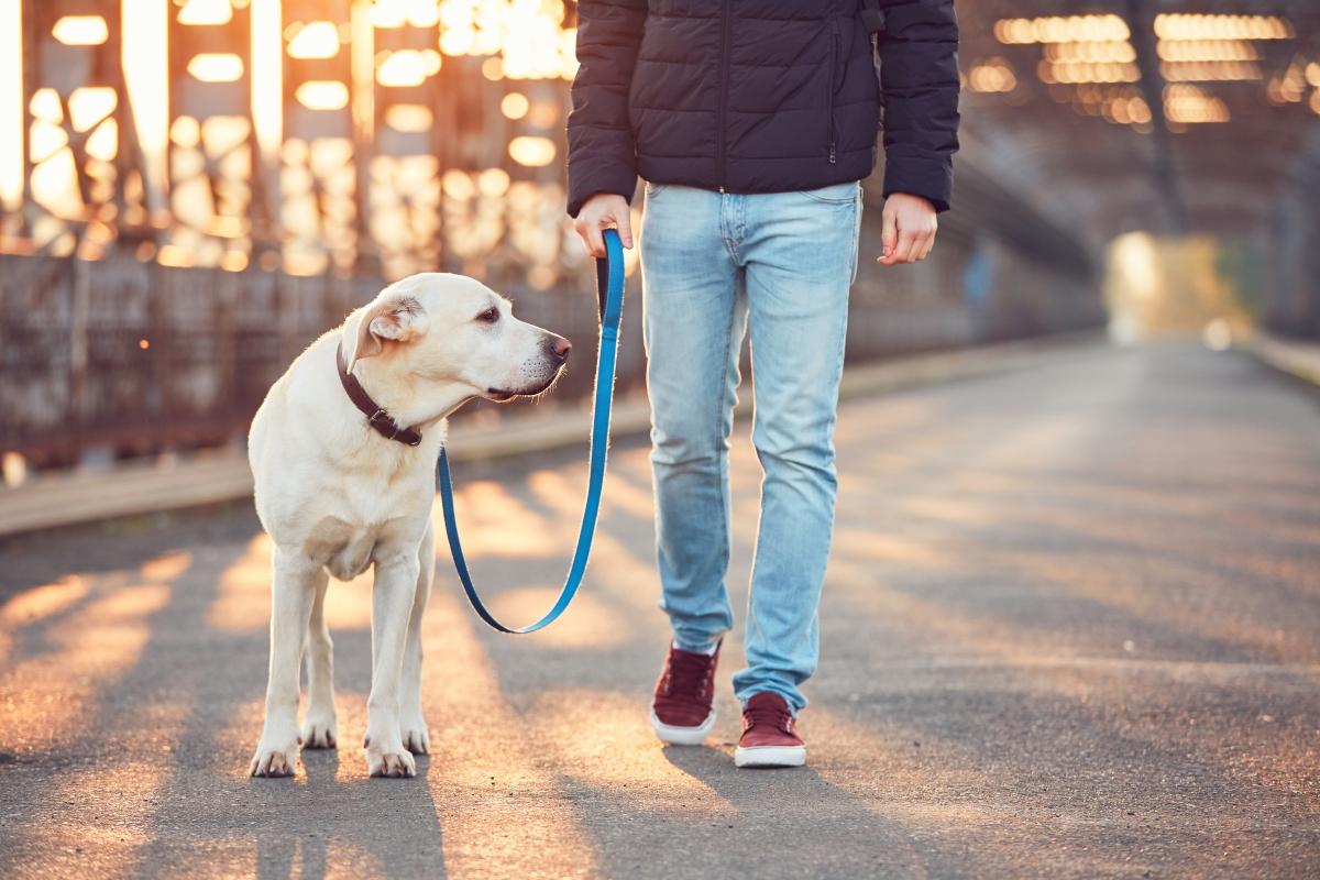 Не подценявайте ролята на домашните любимци. Научно доказано е, че хората, които имат кучета по-лесно контролират теглото си.