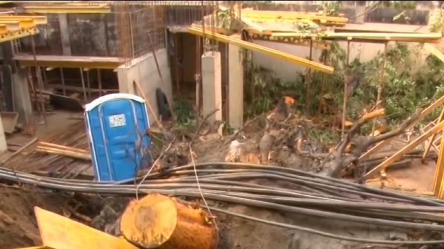 Стотици семейства останаха без ток заради паднало дърво във Варна