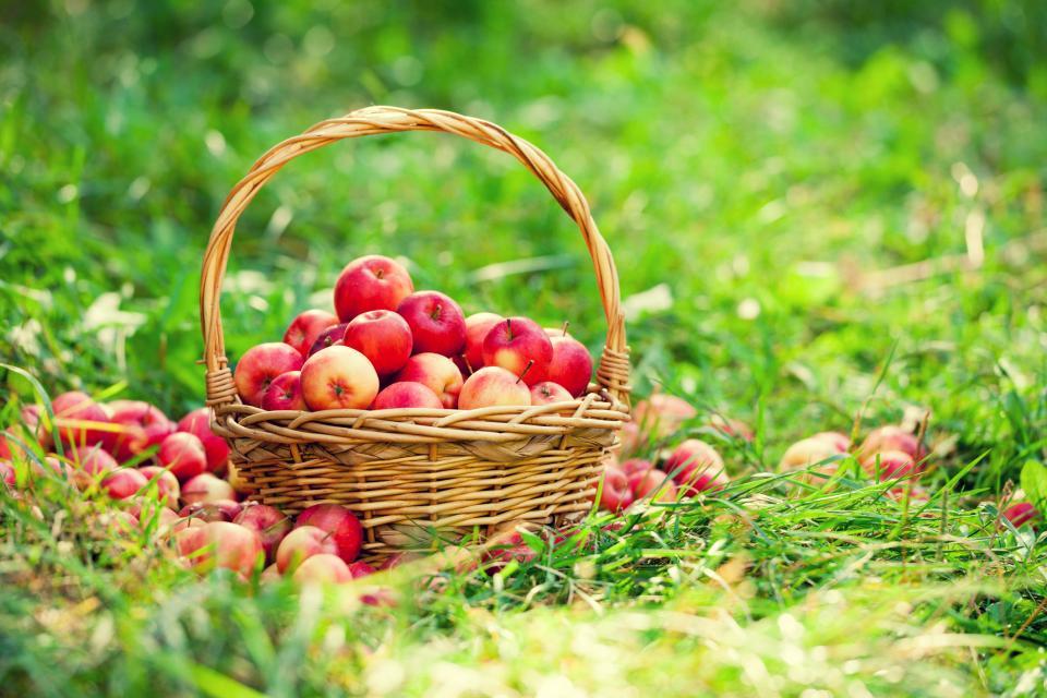 ябълки кошница трева