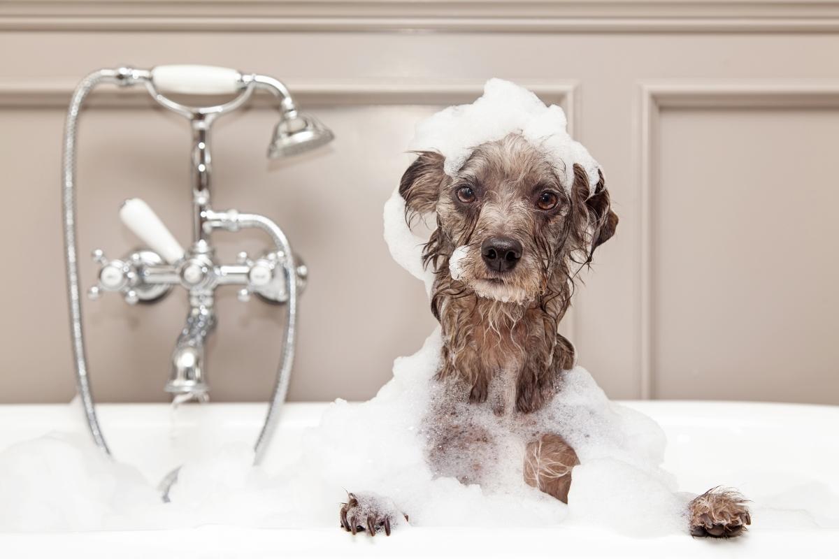 За притежателите на вана: нищо не може да ни отпусне в дъждовен ден така добре, както топла вана.
